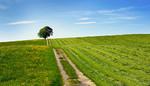 Baum Feld Frühling