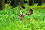 Hirsch im Waldgras