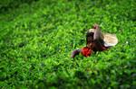 Teepflückerin in Nuwara Eliya auf Sri Lanka